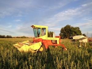 A beautiful evening for swathing our fields! Can you believe that sky?